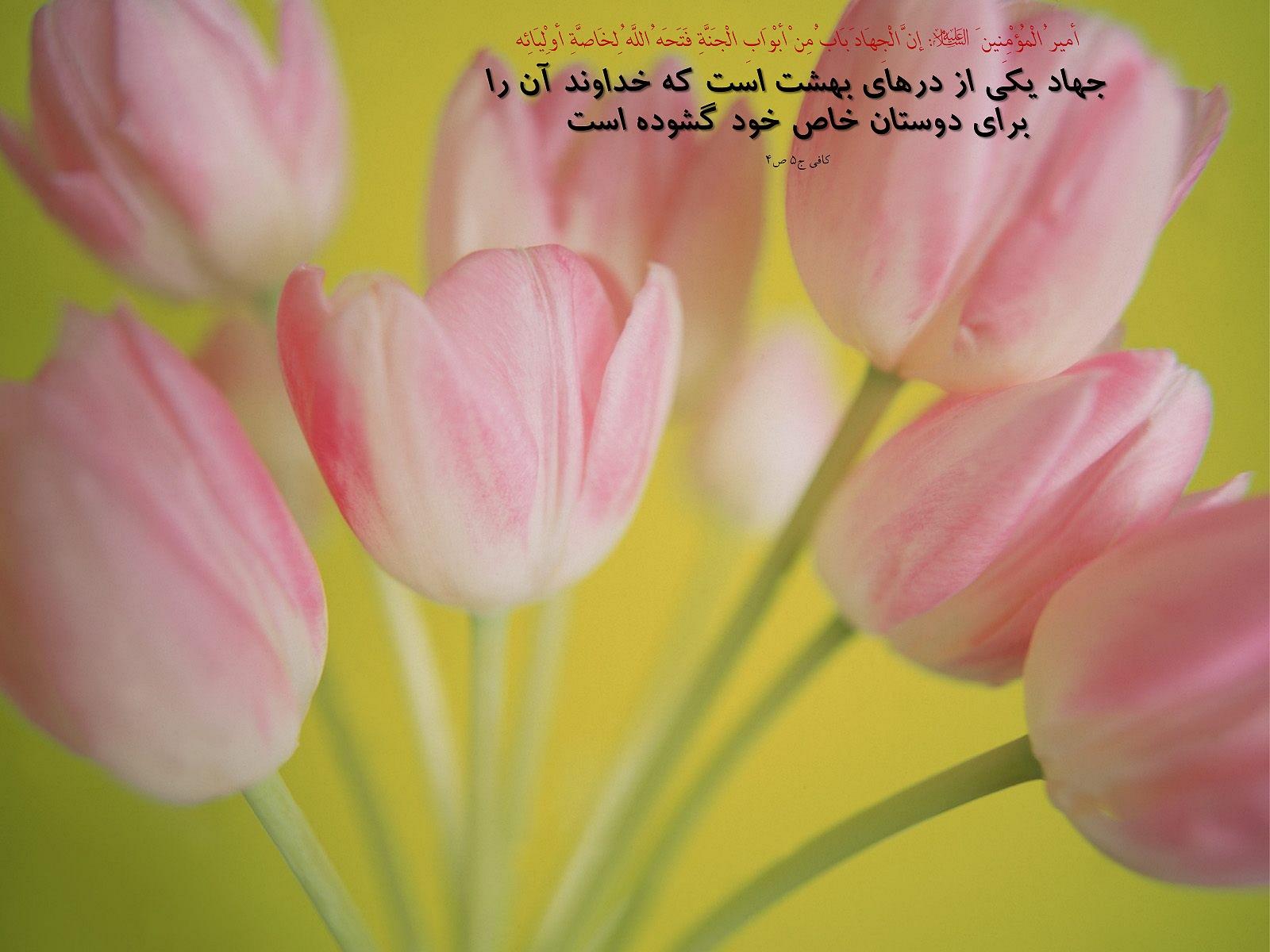 http://saina.gohardasht.com/uploaded/_6F97D5F2-9DE6-4FC0-B336-F32B9B94D6BD_.jpg